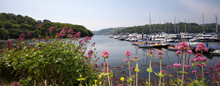 View of the river Dart