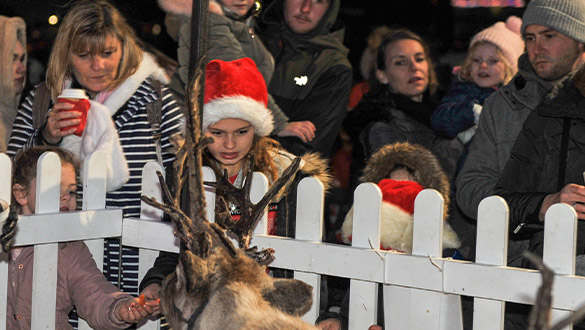 Sovereign Shines Reindeer at The Waterfront