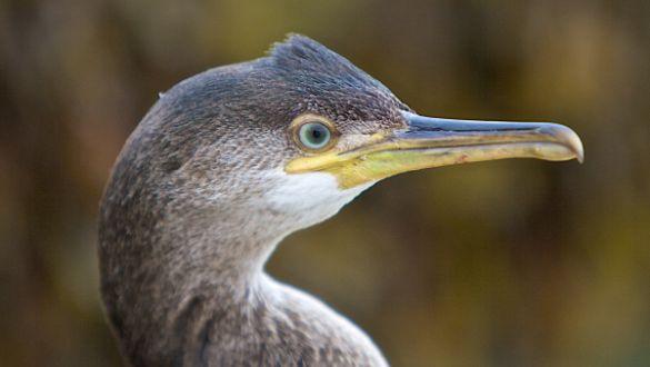 Brent Lodge Wildlife Hospital Updates